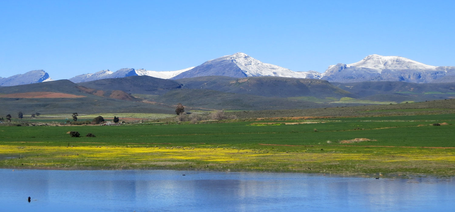 Matroosberg covered in snow with spring flowers in the Ceres valley below.